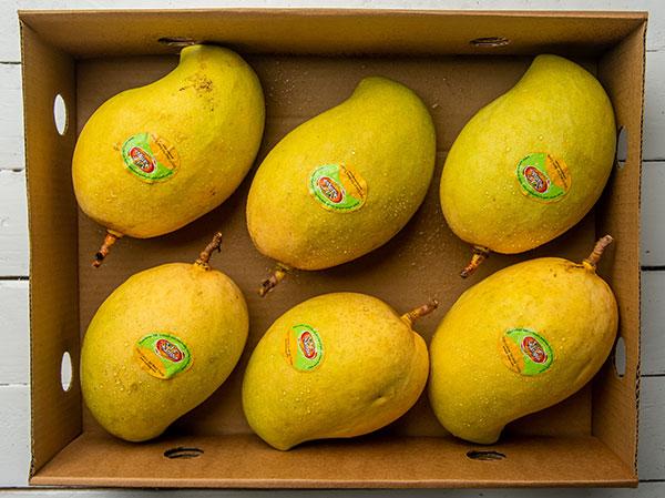 TJC-Mango-in-Export-Carton.jpg